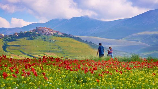 Flowers bloom in Castelluccio