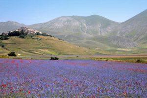 fioritura-castelluccio-2